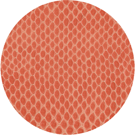 Coral Snakeskin - Coaster Round 8 In - Opal and Olive