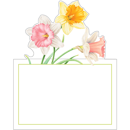 Daffodil Waltz - Place Cards - Opal and Olive