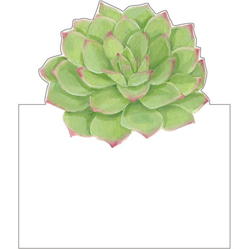 Succulents - Place Cards