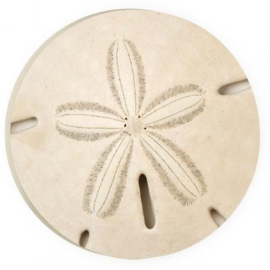 Sand Dollar Car Coaster