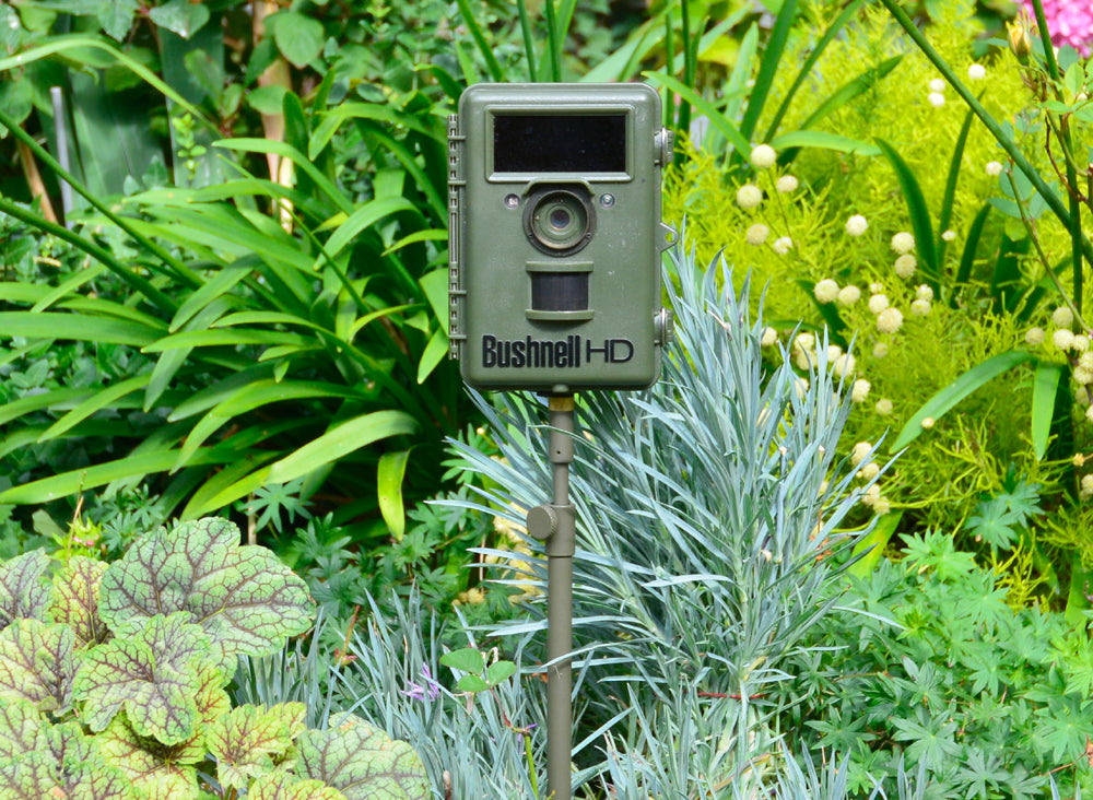 trail camera and camera trap set up using our E2 Ground spike . Made in the UK