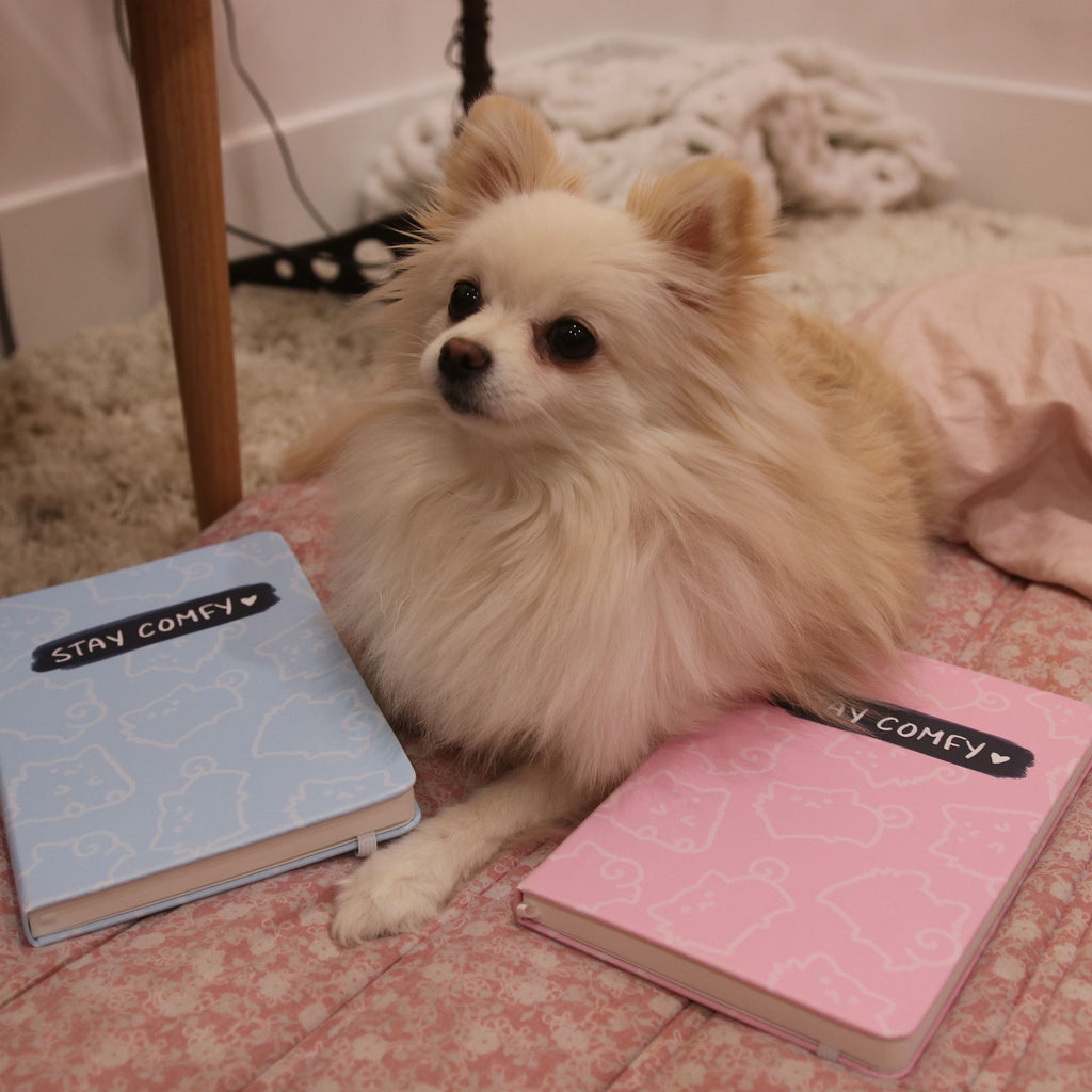 Stay Comfy Notebook - LilyPichu Store