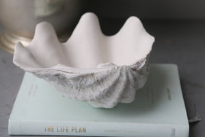 24cm  Resin stone giant clam with sun bleached base and matte natural interior