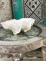 23cm  resin stone, faux ruffled giant clam- PRE ORDER FOR BEGINNING OF DECEMBER DELIVERY