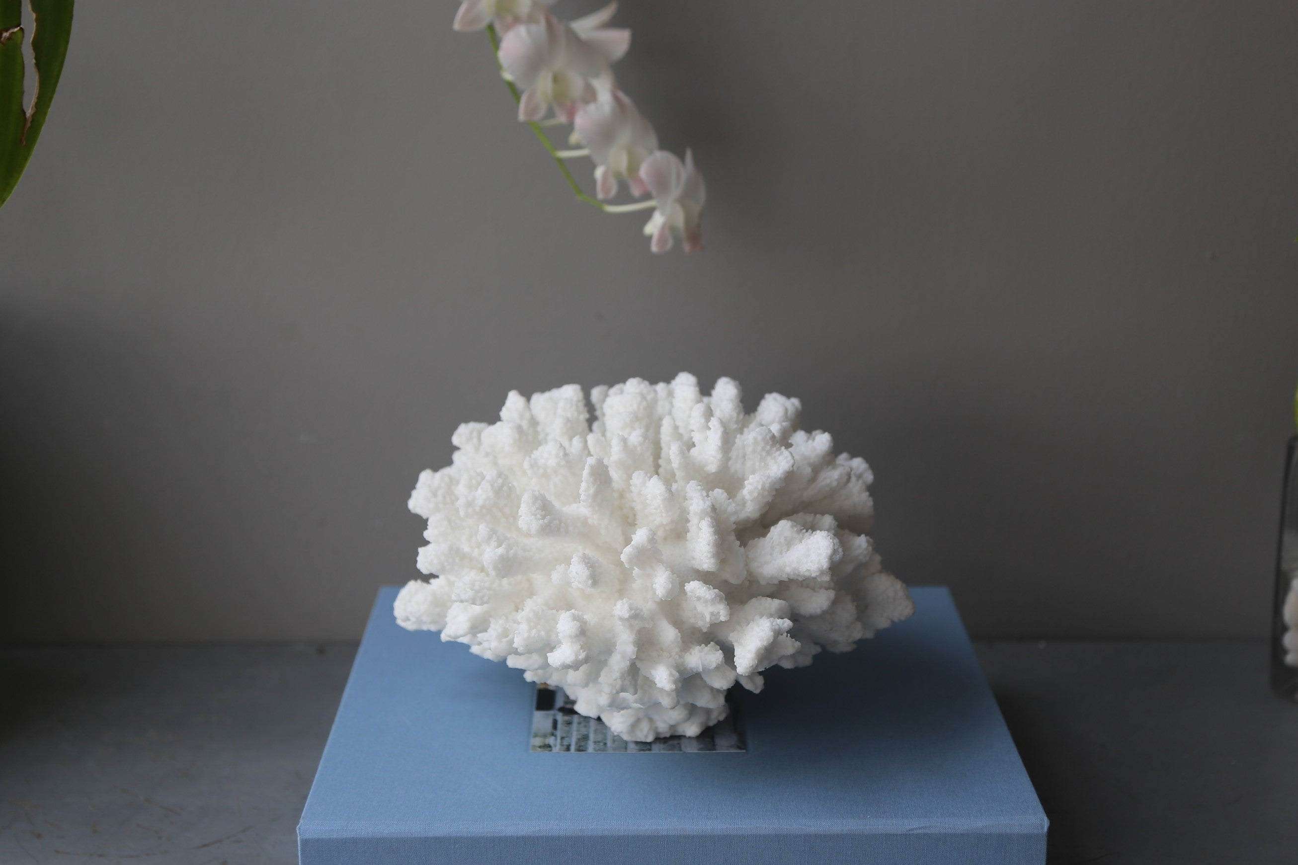 Large faux Staghorn coral sculpture