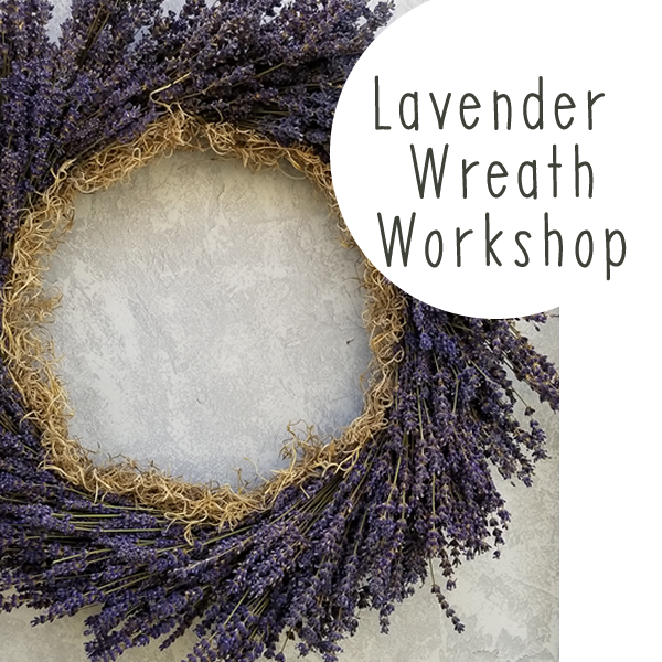 Workshop-Lavender Wreath August 7th