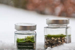 Fragrant Moss Launch