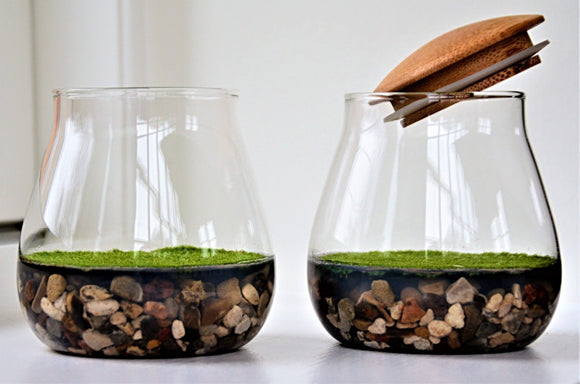 Fragrant moss in decorative glass bowl