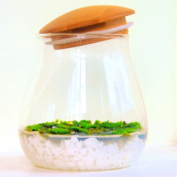 Fragrant Moss in jar