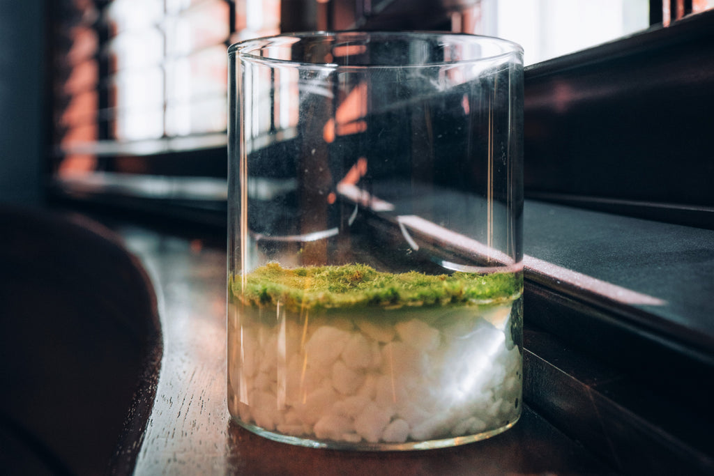 Fragrant Moss Plant in a Jar | Natural Air Freshener