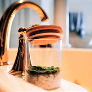 Fragrant Moss Vase - Natural Air Freshener with Fragrant Moss