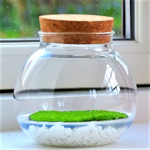 Fragrant Moss Bowl - Natural Air Freshener with Fragrant Moss