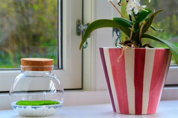 Fragrant moss in glass bowl | Home decor