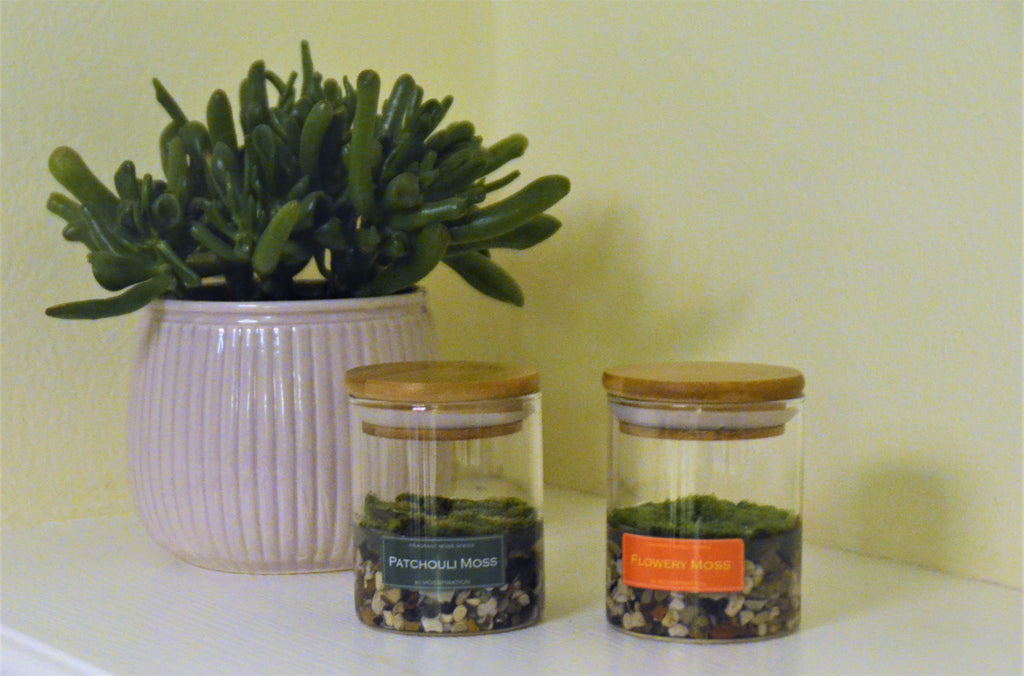House plants with fragrant moss glasses