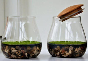Fragrant Moss Terrarium - Natural Air Freshener with Fragrant Moss