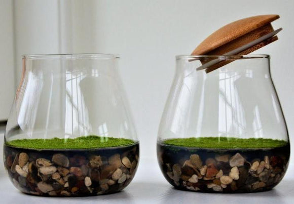 Fragrant moss in glass bowl with wooden lid