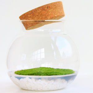 Fragrant moss in glass bowl