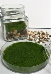 Moss in jar and on plate