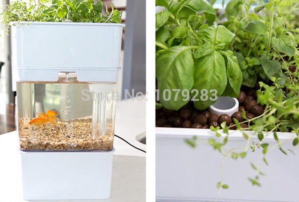 Tabletop Aquaponics - GreenLit Grow