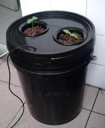 10L Bucket Aeroponics pot with 2 net cup  (Black)