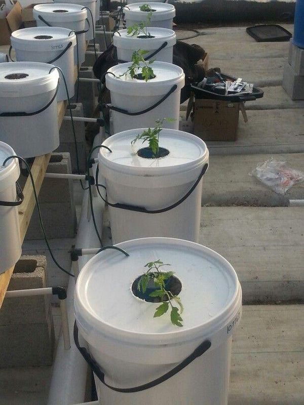 Dutch Bucket DWC Hydroponics with 6 inch Net Pot - GreenLit Grow