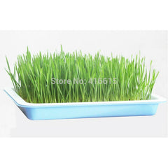 SquarePlastic Hydroponics Nursery Seeds Sprout Vegetable Planter Double Seedling Plate