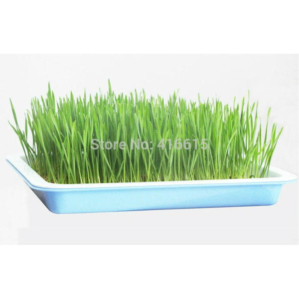 SquarePlastic Hydroponics Nursery Seeds Sprout Vegetable Planter Double Seedling Plate - GreenLit Grow