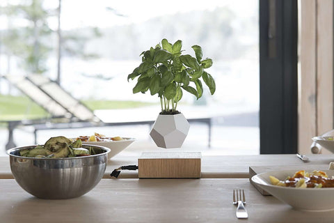levitating-plant-pot-in-the-kitchen