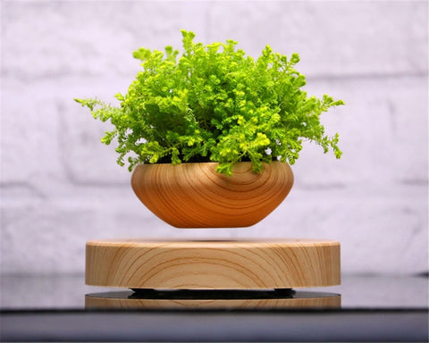 levitating plant pot with green plant