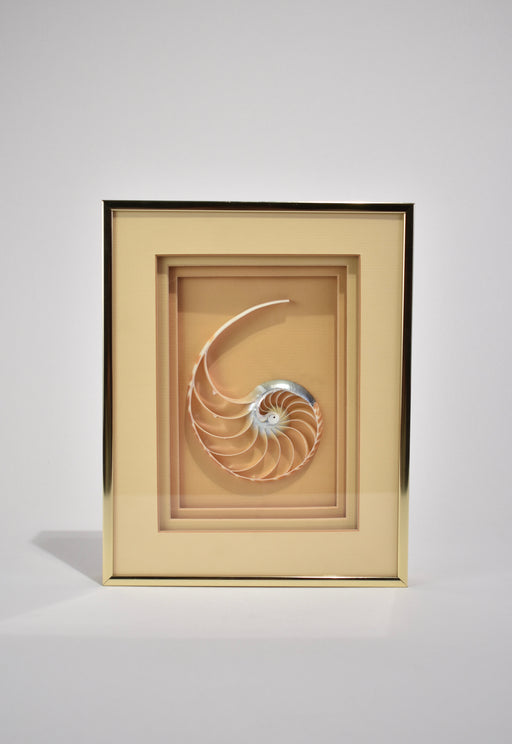 Framed Nautilus Shell
