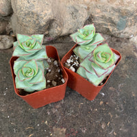 Create Your Own Succulent Log Kit