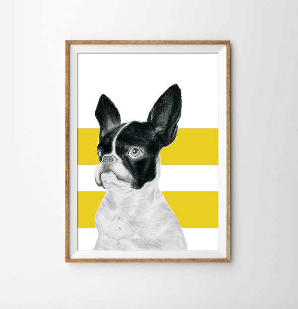 Monsieur Claude de Bone - Yellow Stripe