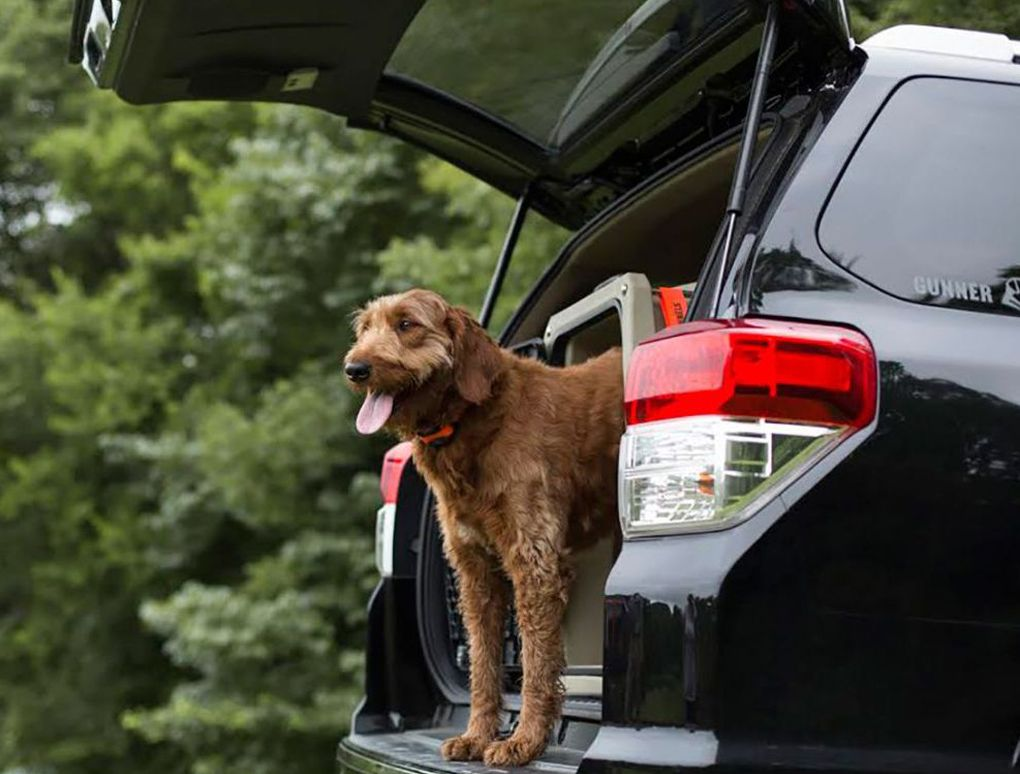 No Excuse Not to Practice Dog Car Safety