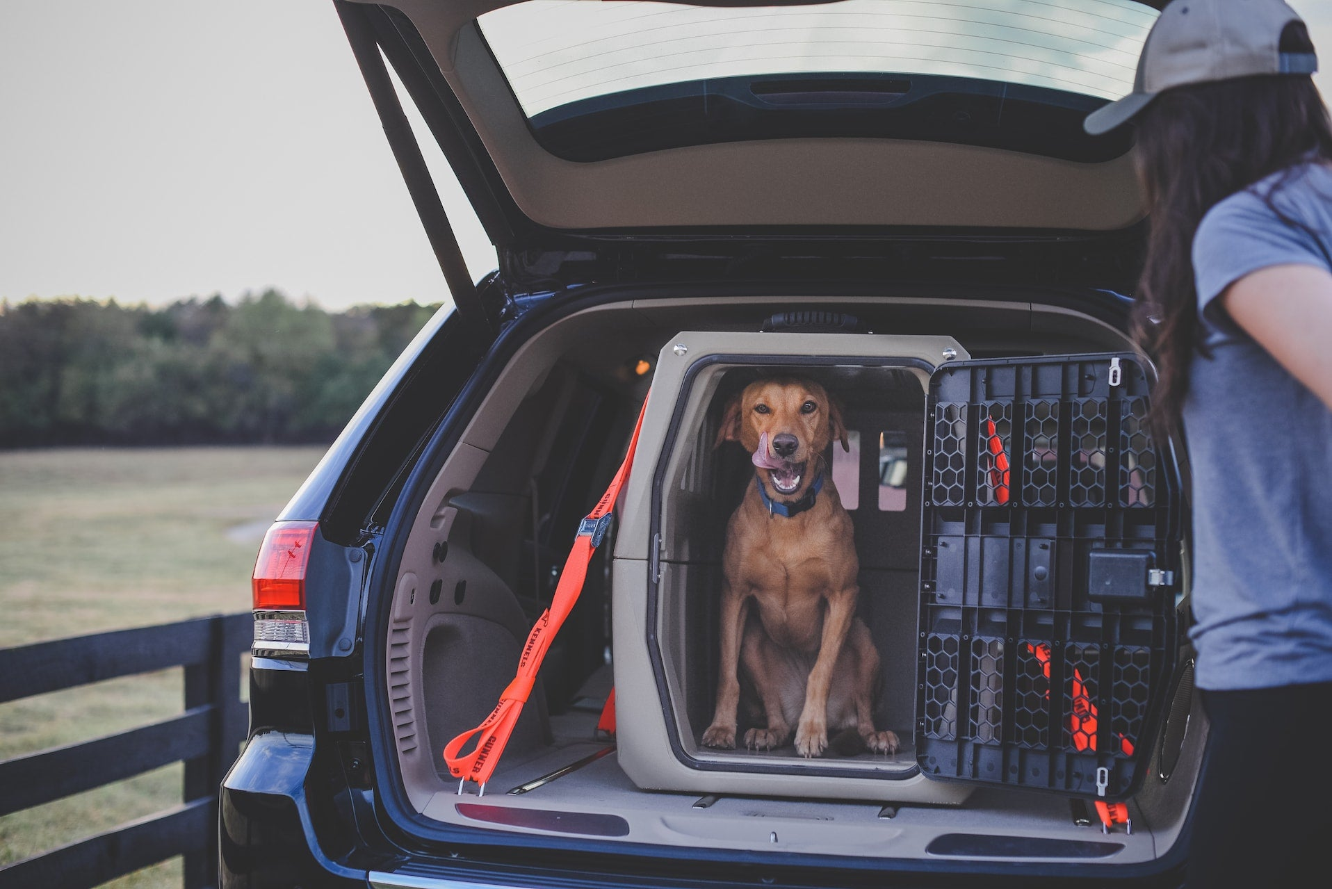 Winner of the Best Dog Crate for Car Travel