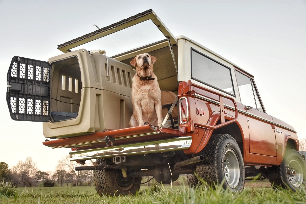 The Best Dog-Friendly Vehicles To Travel In
