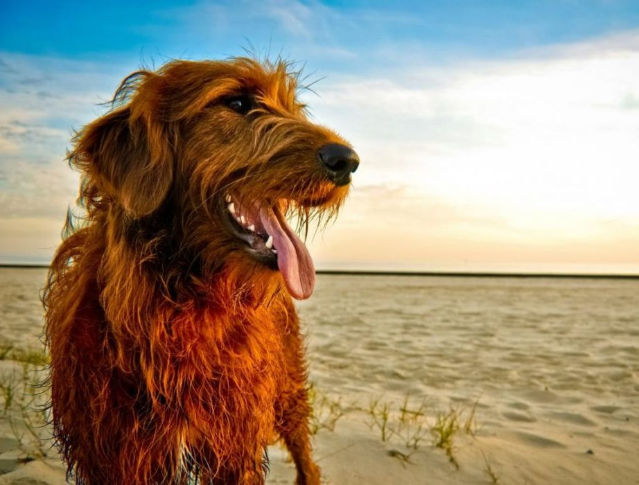 Getaway On These 5 Dog Friendly Vacation Spots
