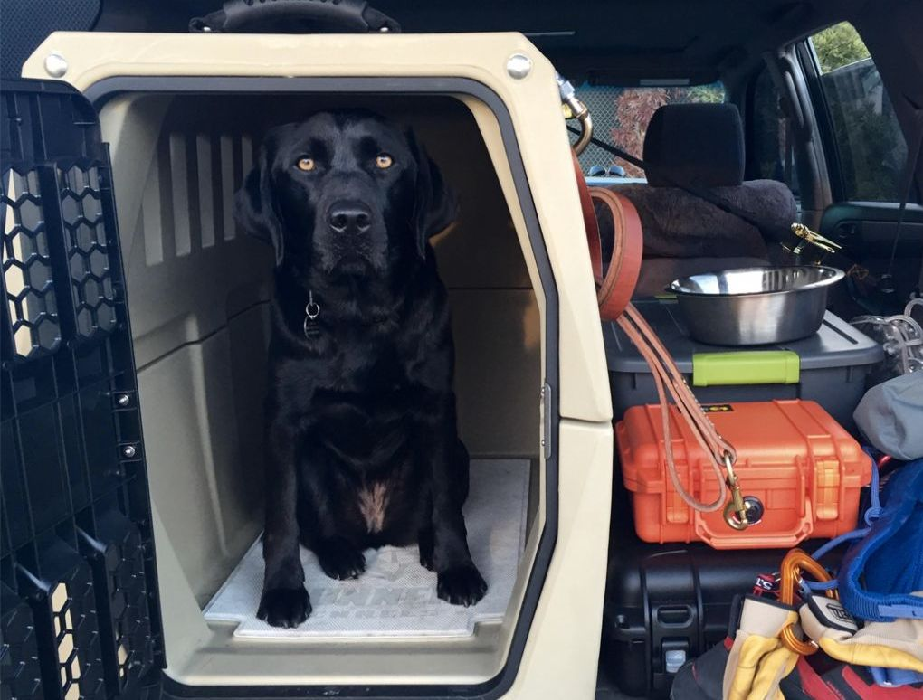 The Best Crate for a Working Dog
