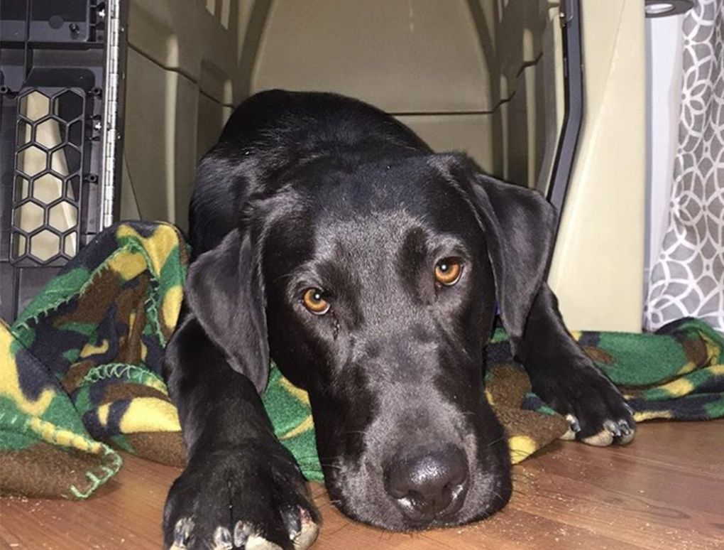 How To Ease A Dog's Storm Anxiety