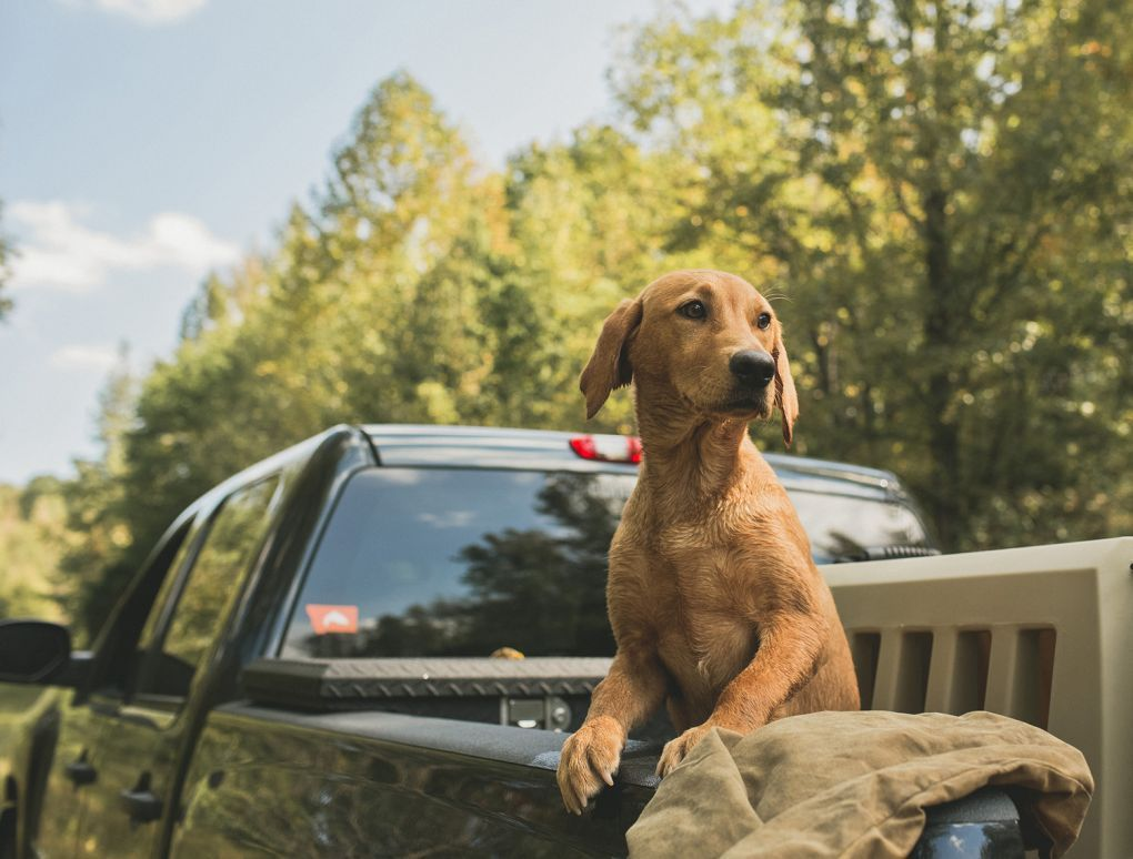Traveling With Dogs: 5 Eye-Opening Statistics