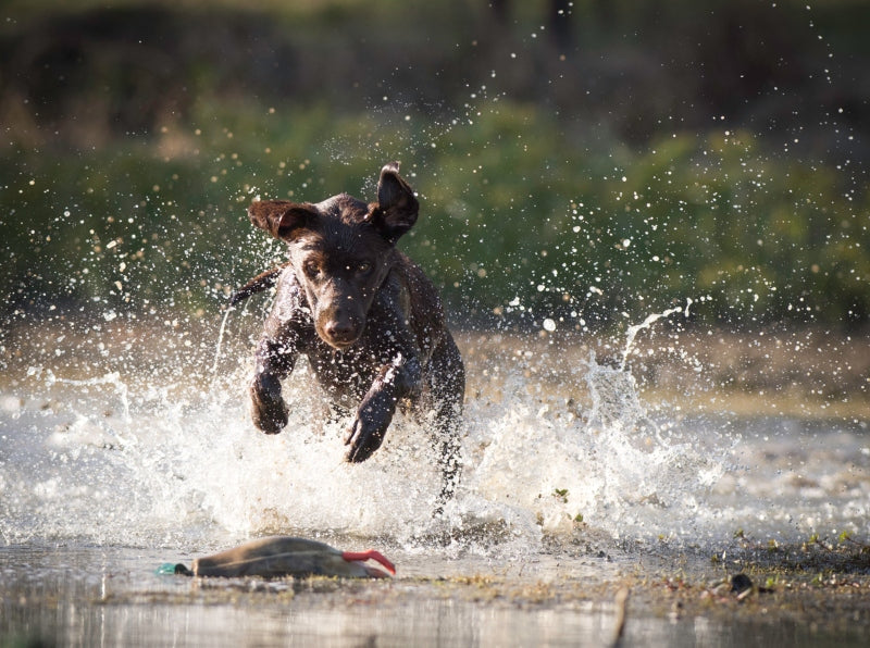 Dogs In Water Can Be In Danger, Too