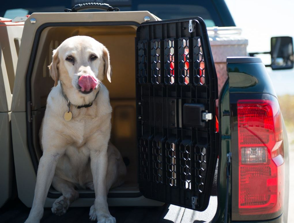 Why Are Dog Kennel Ventilation Systems Important?