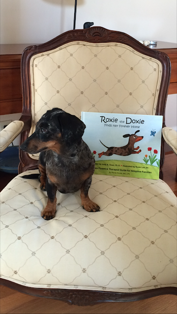 Roxie the Doxie - Saved By Gunner
