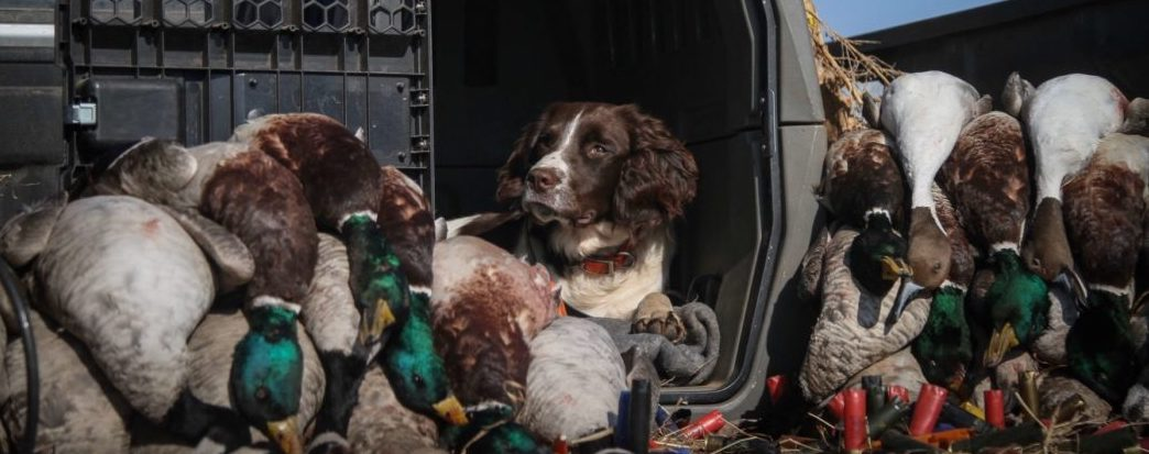 traveling with dogs: hook's gunner kennels survival story