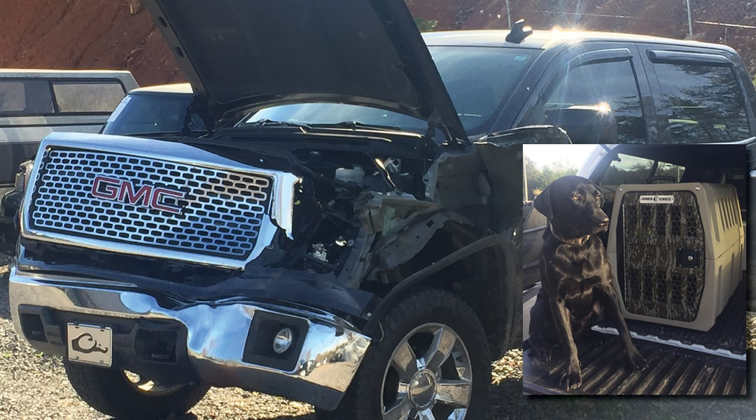 A Cow and a GMC Denali Dually VS Crash Proof Dog Crate