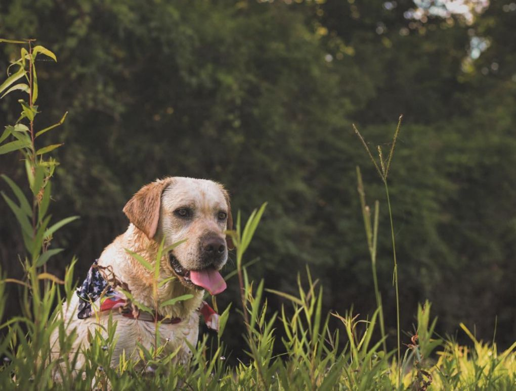 Tips For Dogs & Fireworks