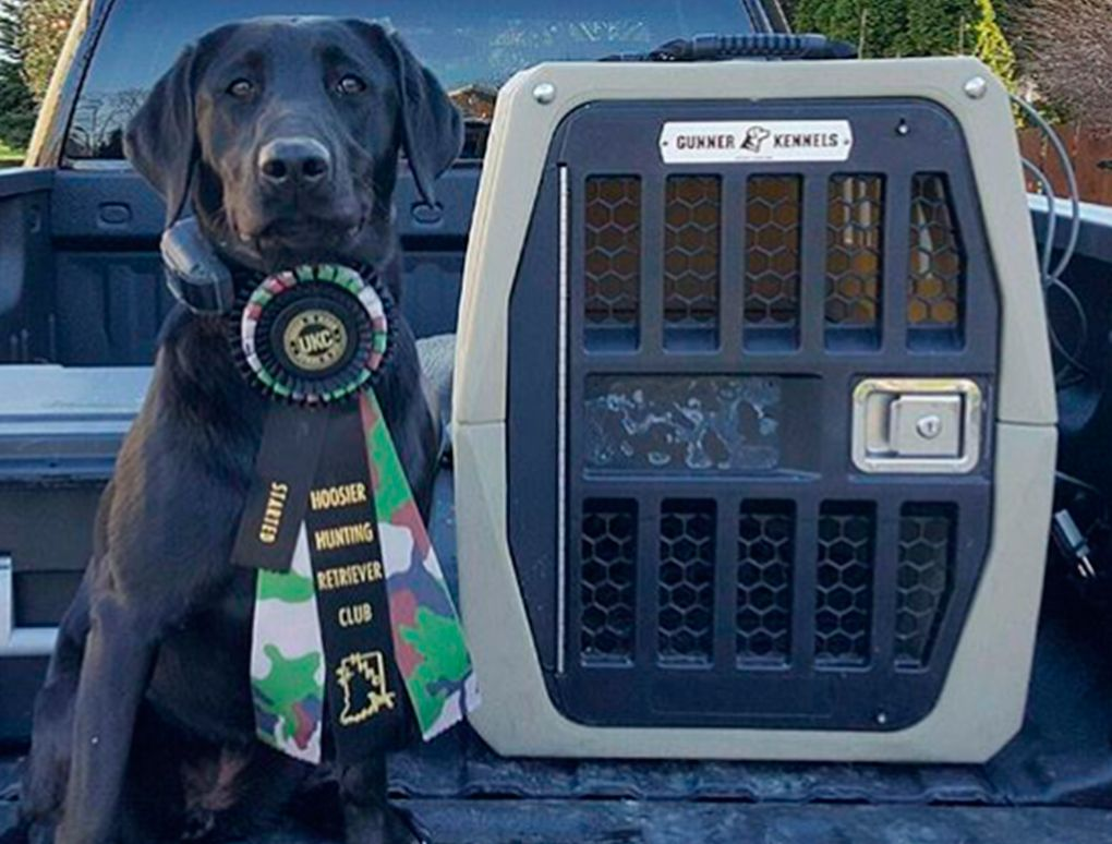 5 Reasons To Participate In Retriever Hunt Tests