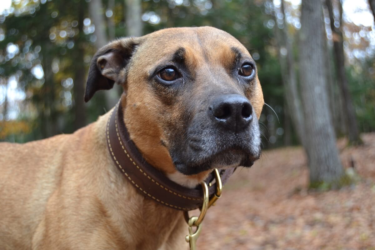 #MyGunnerStory: Separation Anxiety in Dogs