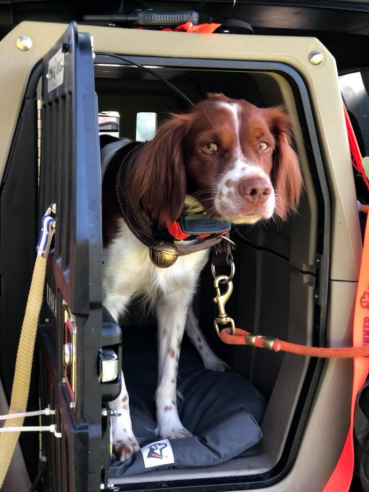 Lincoln, Robb's two-year-old Brittany