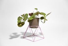 "Load image into Gallery viewer, Big Squat 10"" Plant Stand"