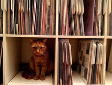 Load image into Gallery viewer, Purfect record dividers by Filotrax
